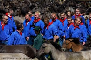 Wildpferdefang Dülmen